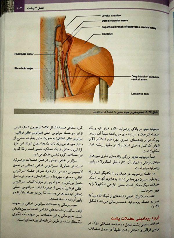 نمونه-کتاب-ترجمه-آناتومی-گری