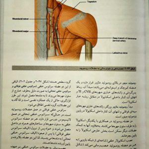 نمونه کتاب ترجمه آناتومی گری ۲۰۲۰