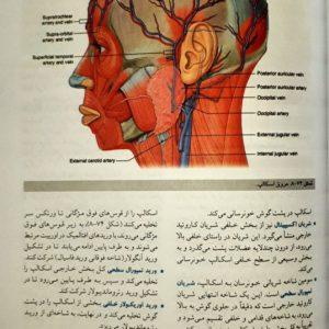 نمونه کتاب سر و گردن گری ۲۰۲۰ – ترجمه حسن زاده