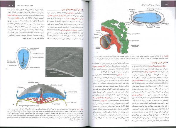 خرید کتاب جنین شناسی لانگمن فارسی