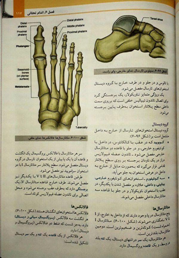 نمونه کتاب آناتومی گری اندام 2020 - حسن زاده