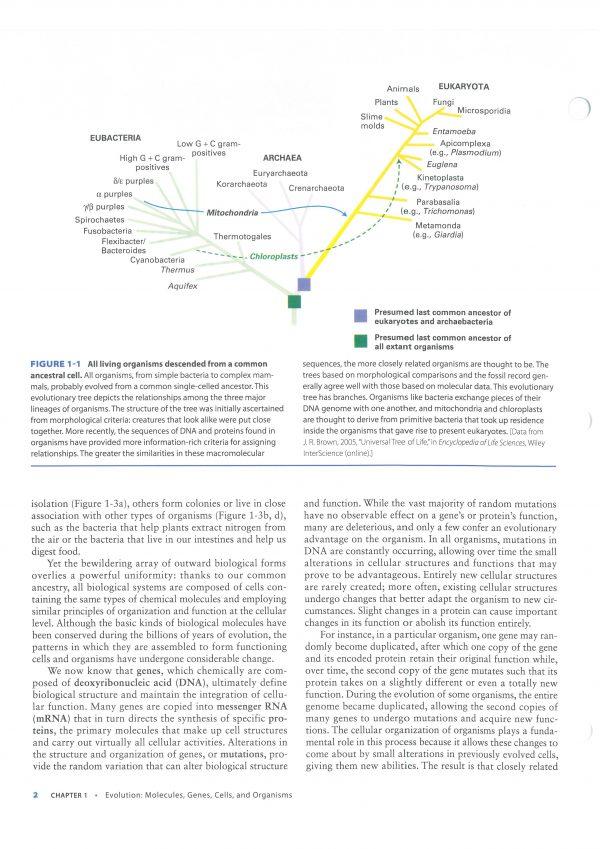 کتاب افست زیست شناسی لودیش - بیولوژی لودیش 2021   تمام رنگی - کاغذ تحریر